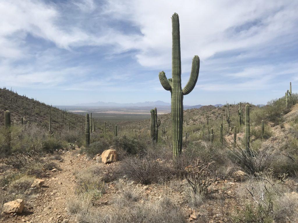 kings canyon saguaro national park